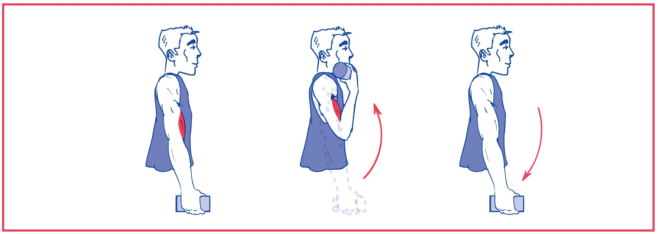 3. Elbow flexion with resistance (weights)