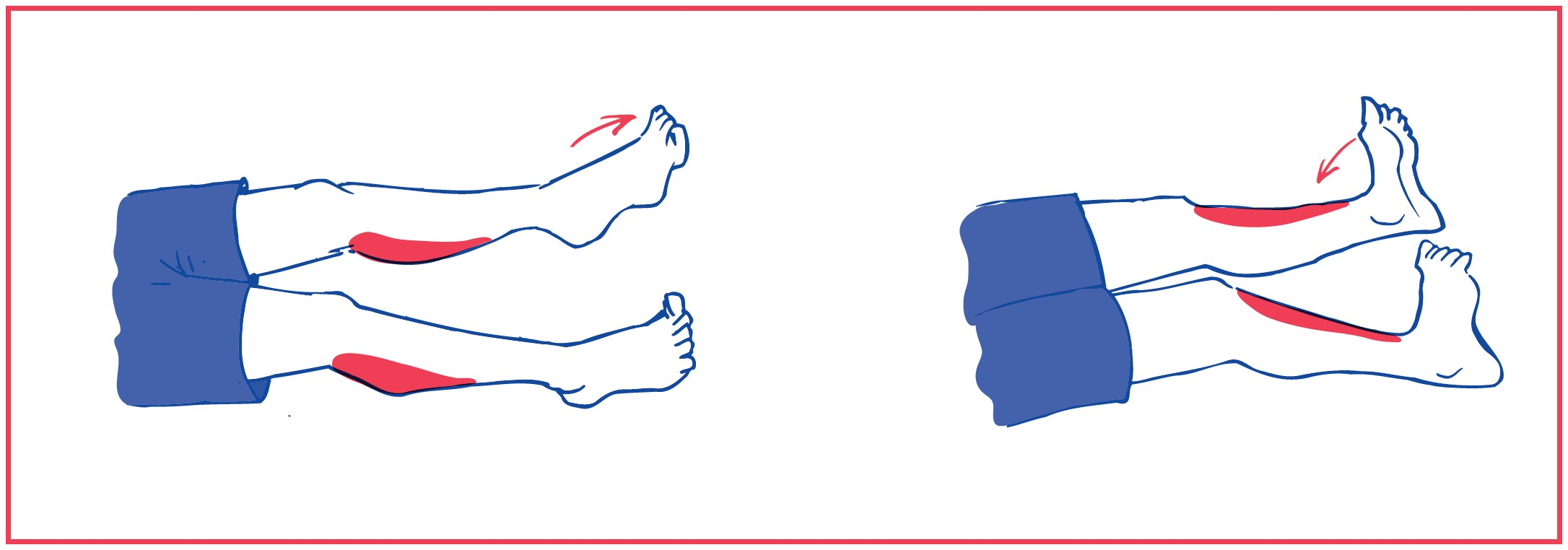 1. Free ankle plantarflexion (foot down) and dorsiflexion (foot up)