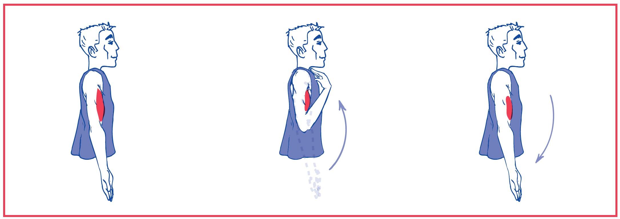 1. Free elbow flexion against gravity