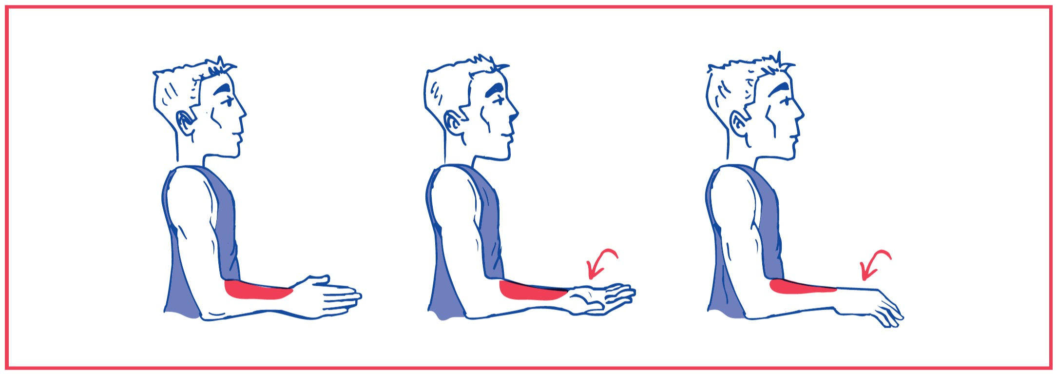 1. Free supination (turning palm up) and pronation (turning palm down)