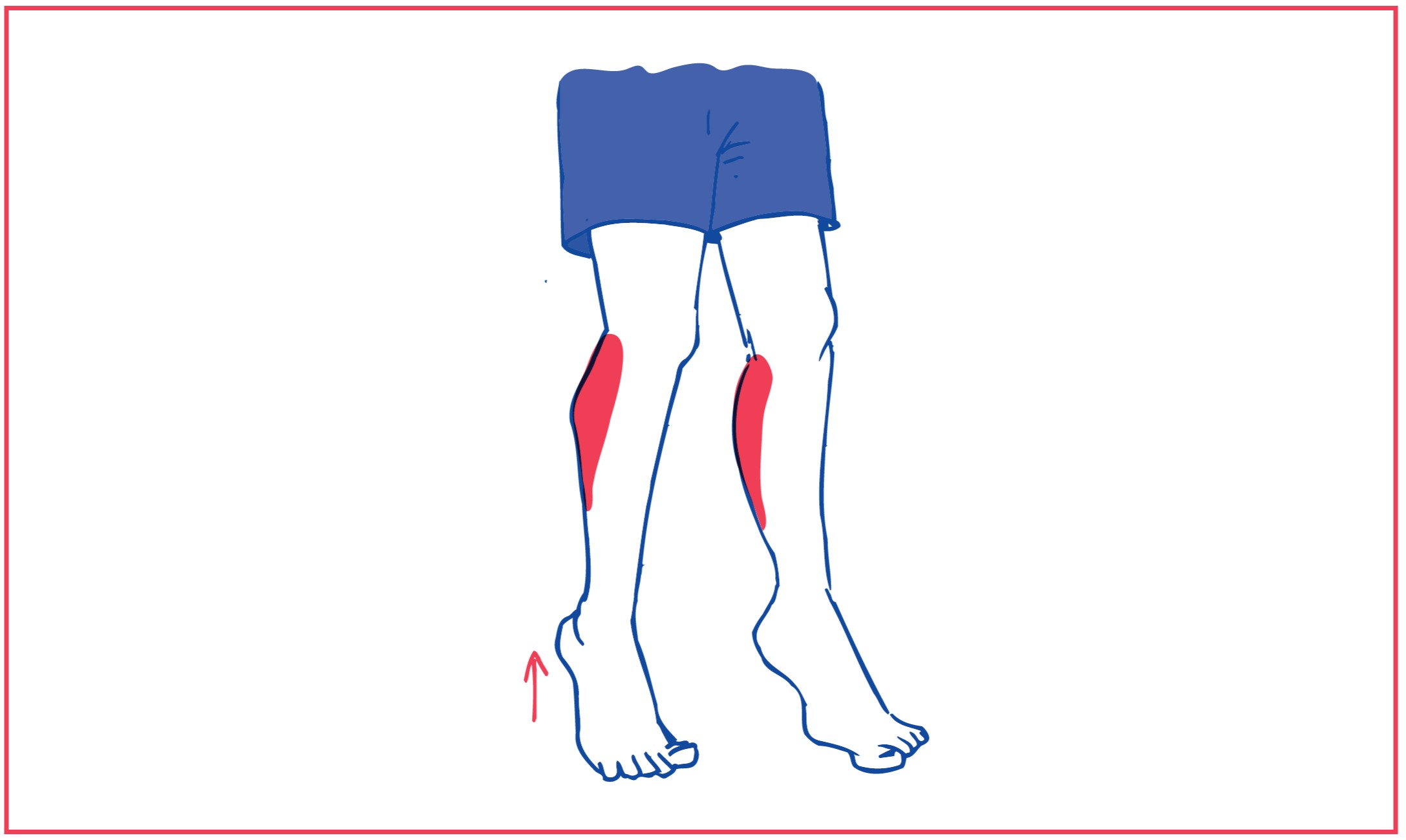 1. Weight bearing for ankles